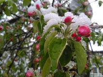 Neige au printemps après des effets Images libres de droits