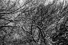 Neige blanche sur les arbres noirs Photographie stock libre de droits