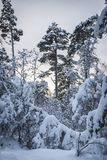 Neige chargée Photo libre de droits