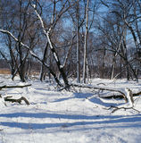 Neige, ciel et ombres Photo libre de droits