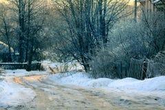 Neige congelée de paysage de forêt d'hiver Image libre de droits