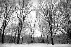 Neige couverte Images stock