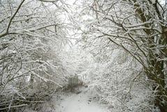 neige couverte de chemin forestier Images libres de droits