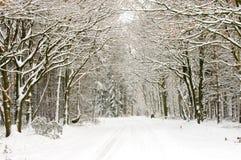 neige couverte de forêt Photos libres de droits