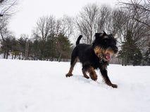 Neige d'amour de chiens aussi Images libres de droits
