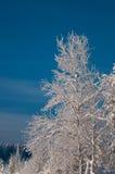 Neige d'arbre couverte en Suède Photos libres de droits