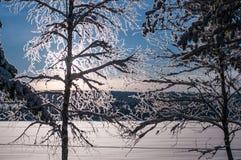 Neige d'arbre couverte en Suède Photos stock