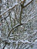 Neige d'hiver Photo libre de droits