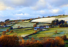 Neige d'hiver, avec le vert et l'or Photo stock