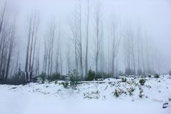 Neige d'hiver dans les bois image libre de droits