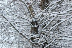 Neige d'hiver sur l'arbre de branche images stock