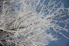 Neige d'hiver sur la branche Photographie stock libre de droits