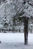 Neige d'hiver sur la branche d'arbre de sapin images stock