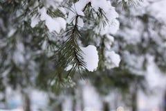 Neige d'hiver sur la branche d'arbre de sapin photo libre de droits