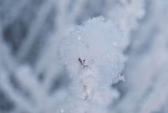 Neige d'hiver sur une branche photographie stock libre de droits