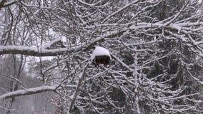 Neige d'hiver tombant dans le jardin banque de vidéos