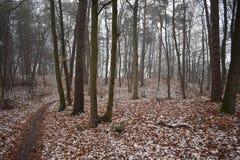Neige dans la forêt image libre de droits