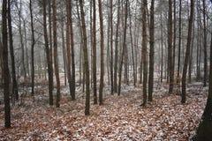 Neige dans la forêt image stock