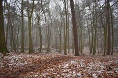 Neige dans la forêt images libres de droits