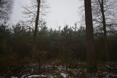Neige dans la forêt photos stock