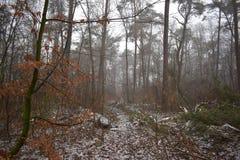 Neige dans la forêt photographie stock libre de droits