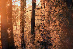 Neige dans la forêt Images stock