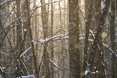 Neige dans la forêt d'hiver Image libre de droits