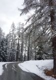 Neige dans le bois du pin Photos libres de droits