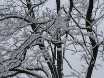 Neige dans les arbres Photos libres de droits