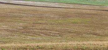 Neige dans les domaines de blé fraîchement semés Photos libres de droits