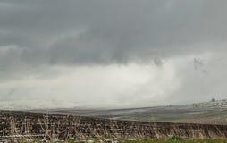 Neige dans les domaines de blé fraîchement semés Photographie stock