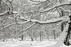 Neige dans Opakua Photos libres de droits