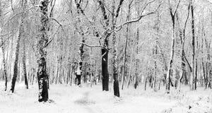 Neige dans une forêt photographie stock libre de droits