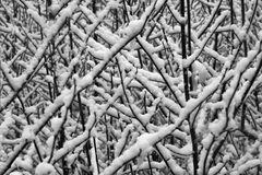 neige de branchements photographie stock