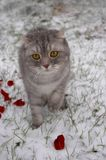 neige de chat Image stock