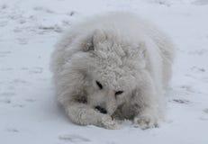 neige de crabot Photo libre de droits