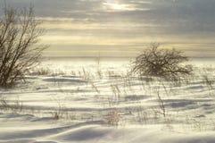 Neige de dérive, neige de soufflement dans un domaine d'hiver, dans la perspective d'un buisson isolé d'aubépine photo stock