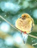 neige de deuil de colombe Photos libres de droits