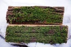 Neige de deux identifiez-vous et mousse verte photo libre de droits