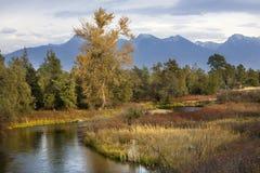 neige de fleuve de montagnes du Montana d'automne de couleurs Images libres de droits