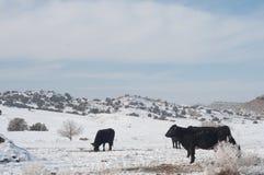 Neige de l'hiver dans le Colorado occidental Photo stock