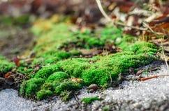 Neige de mousse et de dégel. photographie stock libre de droits