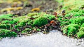 Neige de mousse et de dégel. image stock