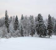 Neige de paysage de forêt de Russianwinter Photographie stock libre de droits