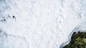 Neige de ressort fondant dans la vraie for?t photographie stock