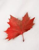 neige de rouge de lame Photographie stock