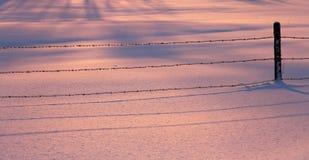 Neige de Wire Pink Blue de barrière Photographie stock libre de droits