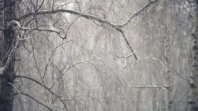 Neige en baisse dans les bois banque de vidéos