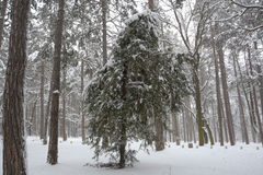 Neige en parc à Sofia, Bulgarie le 29 décembre 2014 Photographie stock libre de droits