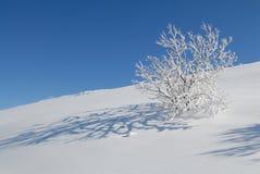 Neige et arbre Image libre de droits
